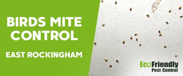 Bird Mite Control East Rockingham