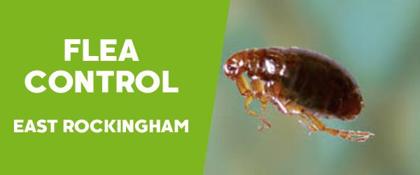 Fleas Control East Rockingham