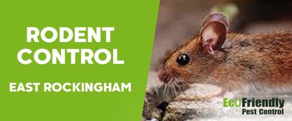 Rodent Treatment East Rockingham