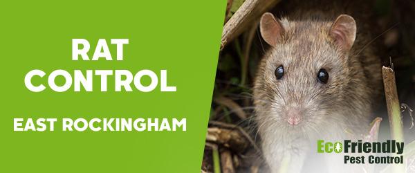 Rat Pest Control East Rockingham