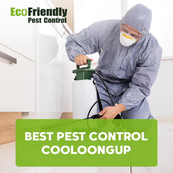Best Pest Control Cooloongup