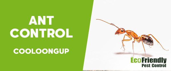 Ant Control Cooloongup