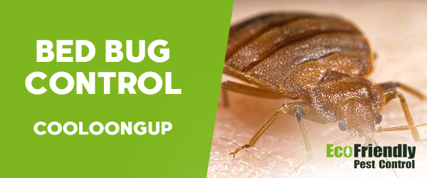 Bed Bug Control Cooloongup