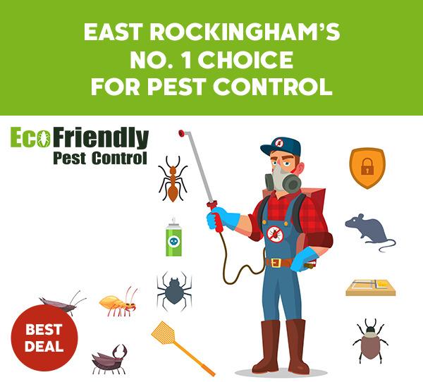 Pest Control East Rockingham