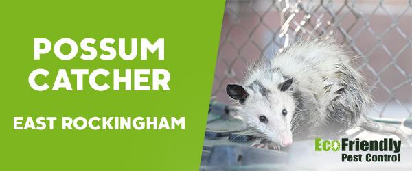 Possum Catcher East Rockingham