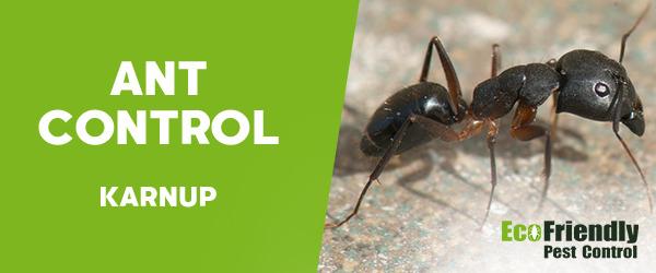 Ant Control Karnup