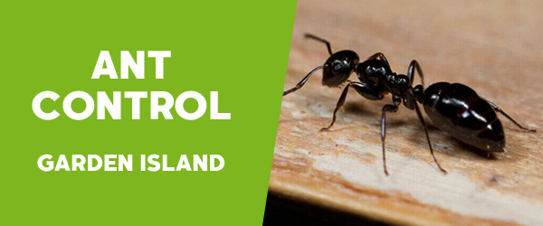 Ant Control Garden Island