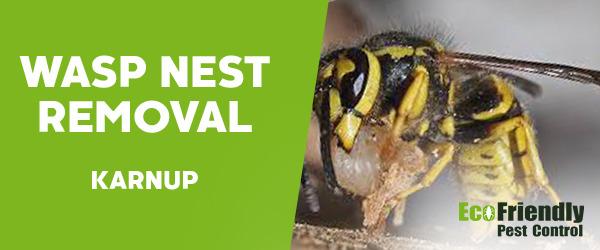 Wasp Nest Remvoal Karnup