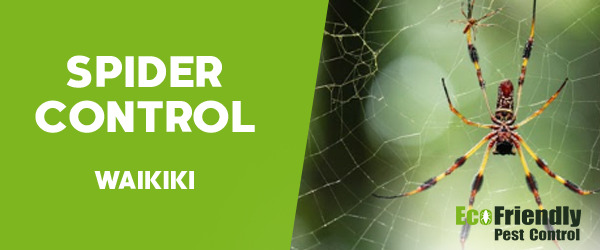 Spider Control Waikiki
