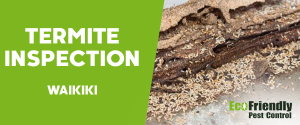 Termite Inspection Waikiki