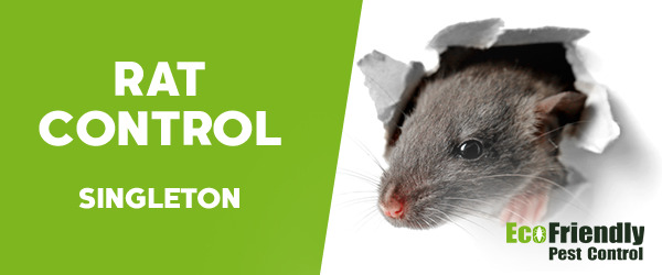 Rat Pest Control Singleton
