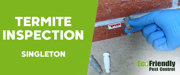 Termite Inspection Singleton
