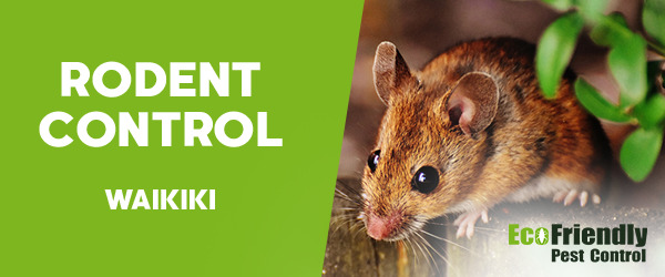 Rodent Treatment Waikiki