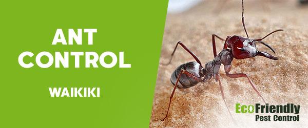 Ant Control Waikiki