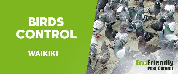 Birds Control Waikiki
