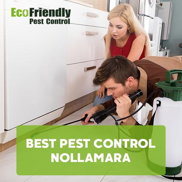 Best Pest Control Nollamara