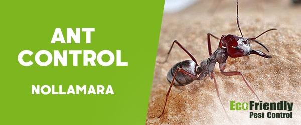 Ant Control Nollamara