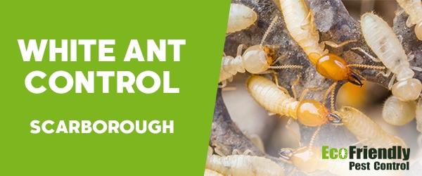 Pest Control Scarborough
