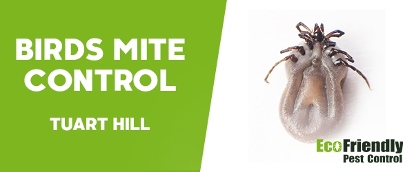Bird Mite Control  Tuart Hill