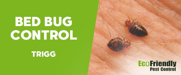 Bed Bug Control Trigg