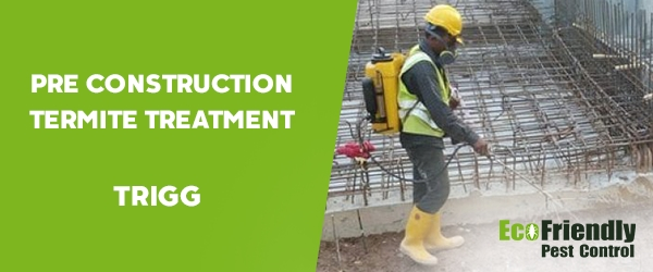 Pre Construction Termite Treatment Trigg