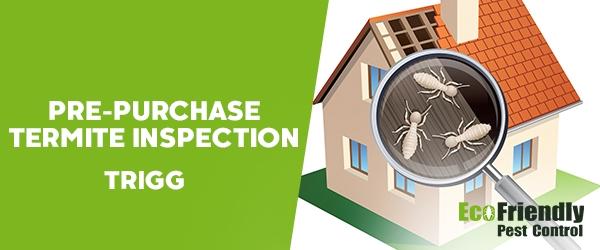 Pre-purchase Termite Inspection Trigg