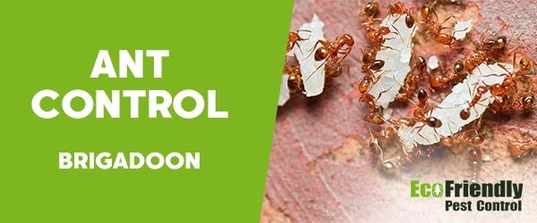 Ant Control  Brigadoon