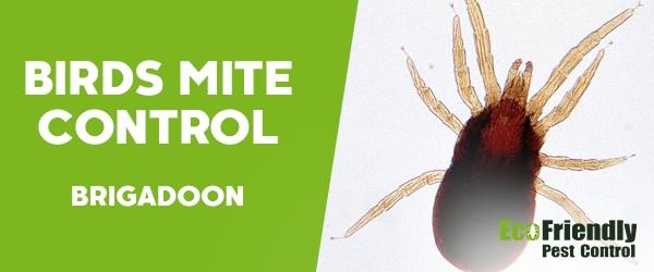 Bird Mite Control  Brigadoon