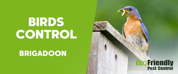 Birds Control  Brigadoon