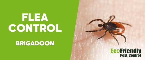 Fleas Control  Brigadoon