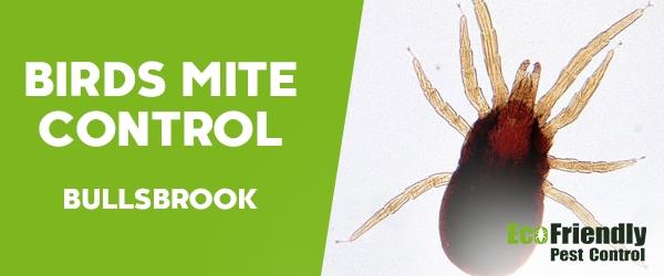 Bird Mite Control Bullsbrook