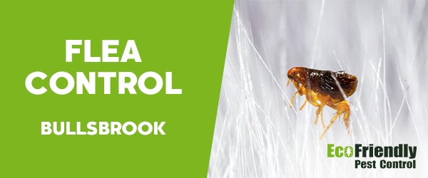 Fleas Control Bullsbrook