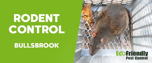 Rodent Treatment Bullsbrook
