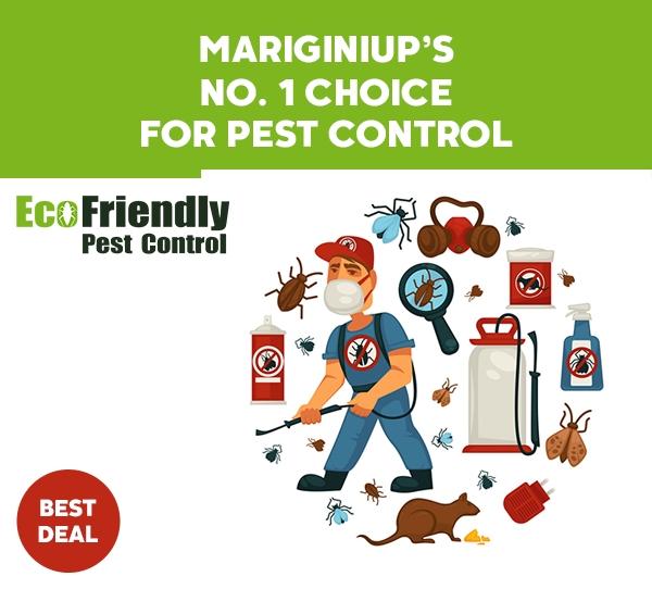 Pest Control Mariginiup