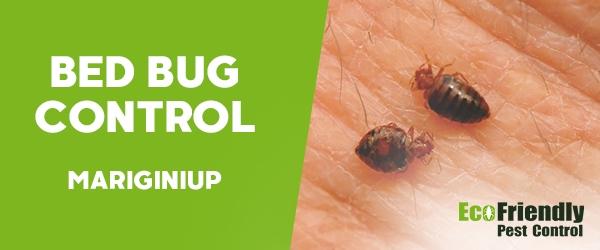 Bed Bug Control  Mariginiup
