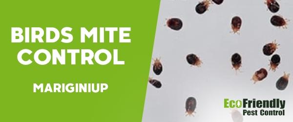 Bird Mite Control  Mariginiup
