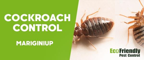 Cockroach Control  Mariginiup