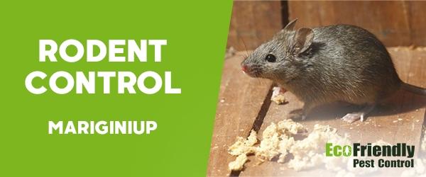 Rodent Treatment  Mariginiup