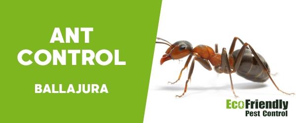 Ant Control Ballajura