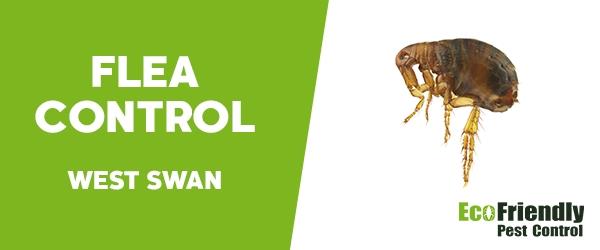 Fleas Control West Swan