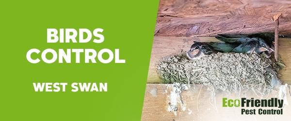 Birds Control West Swan