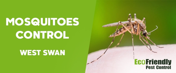 Mosquitoes Control West Swan