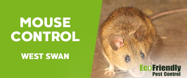 Mouse Control West Swan