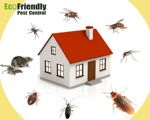 Pest Control Woodlands