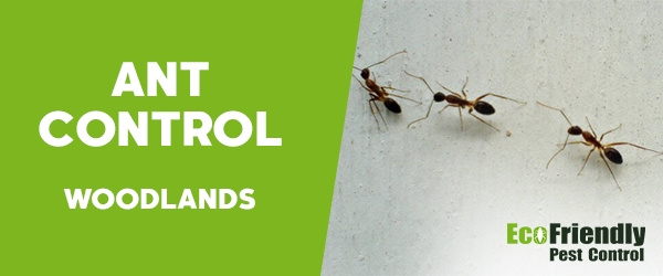 Ant Control Woodlands