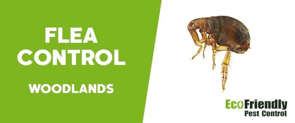 Fleas Control Woodlands