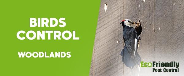 Birds Control Woodlands