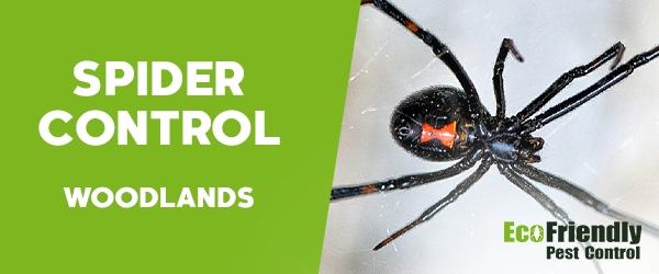 Spider Control Woodlands