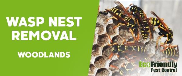 Wasp Nest Remvoal Woodlands