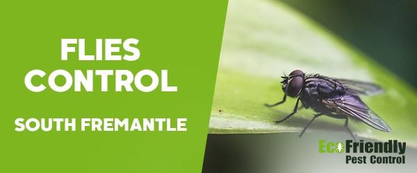 Flies Control  South Fremantle